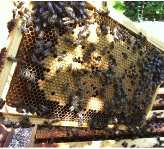 Local Honey Business